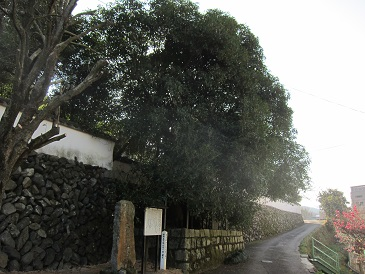 Oshimoritera1