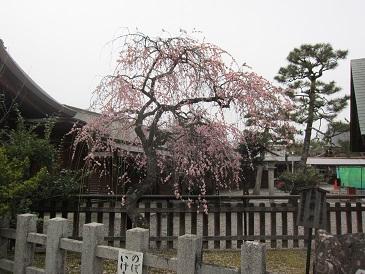 Kurumazaki